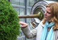 Pflanzen für Wittenberg